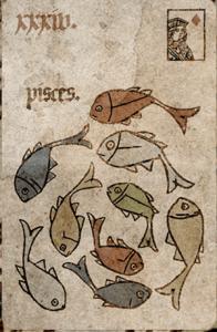 Fish Silson